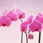 Орхидеи и фэн-шуй