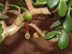 талисман богатства_денежное дерево
