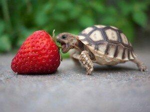 черепаха - символ фэн-шуй